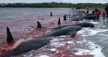 לווייתנים